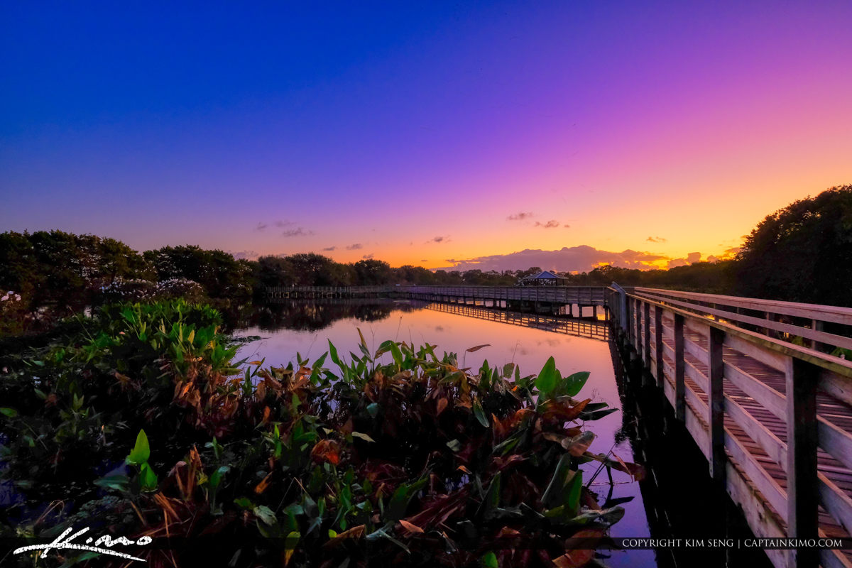 Water Plants Sunrise Wakodahatchee Wetlands Delray Beach
