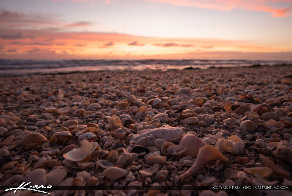 Jupiter Island Beach Shells at Sunrise