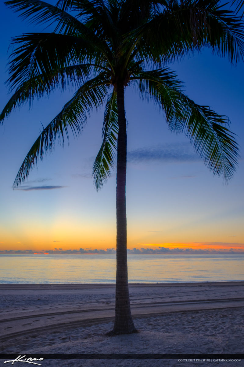 Sunny Isles Beach Sunrise Coconut Tree Lifeguard Tower