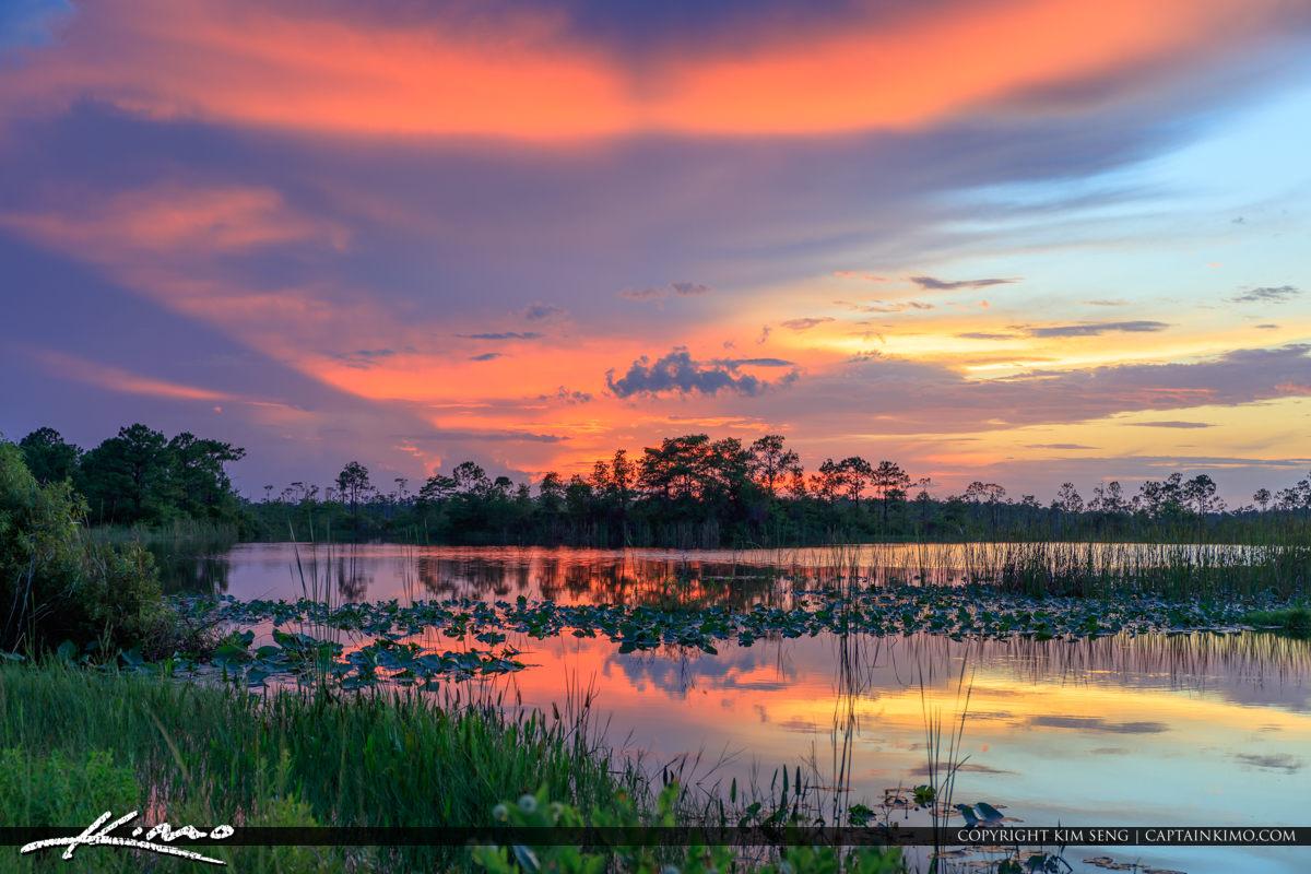 Martin County Wetland Sunset