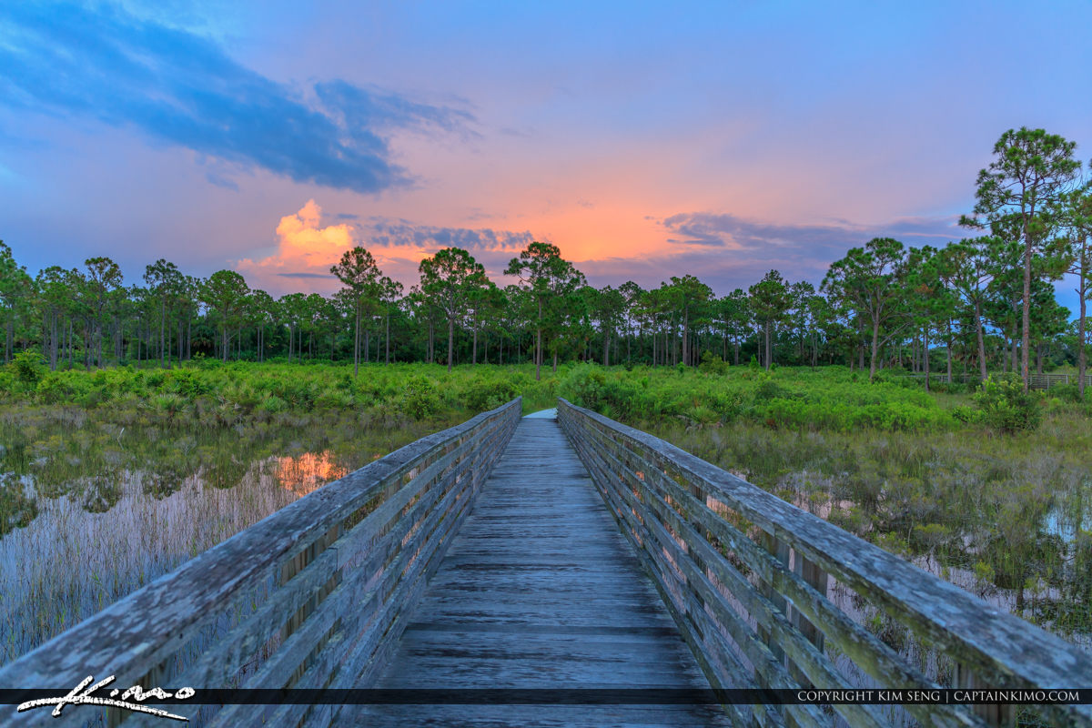 Sweetbay Natural Area Palm Beach Gardens