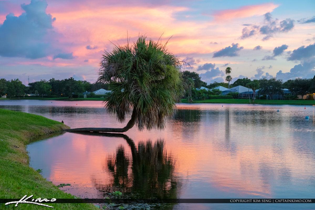 Lake Catherine Cabbage Palm Sunset