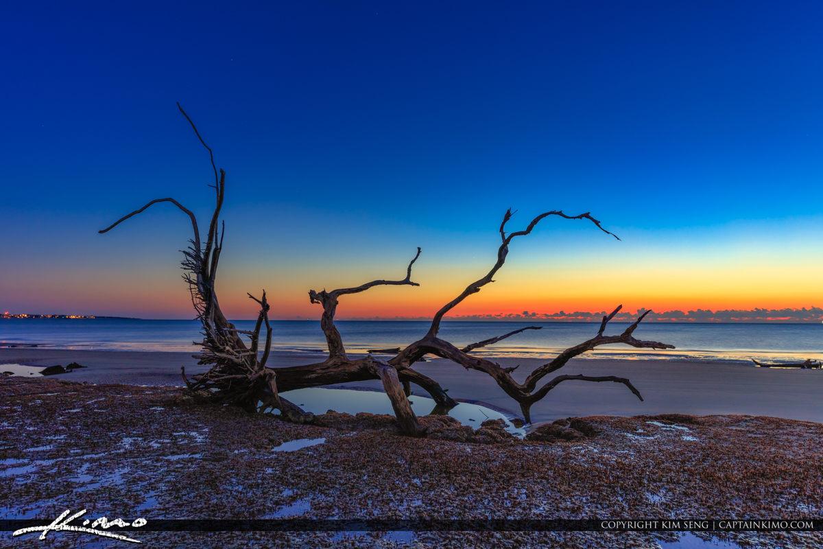 Driftwood at the Beach at Sunrise