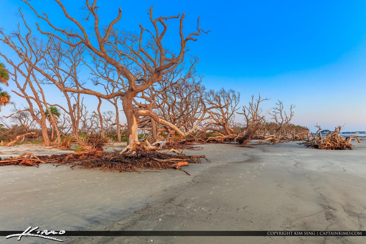 Dead Trees at Driftwood Beach in Jekyll Island Georgia