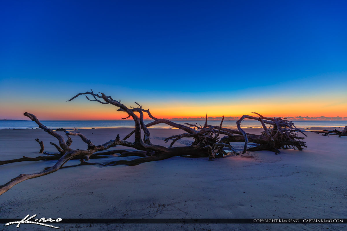 Driftwood at the Beach Before Sunrise with Dark Blue Sky
