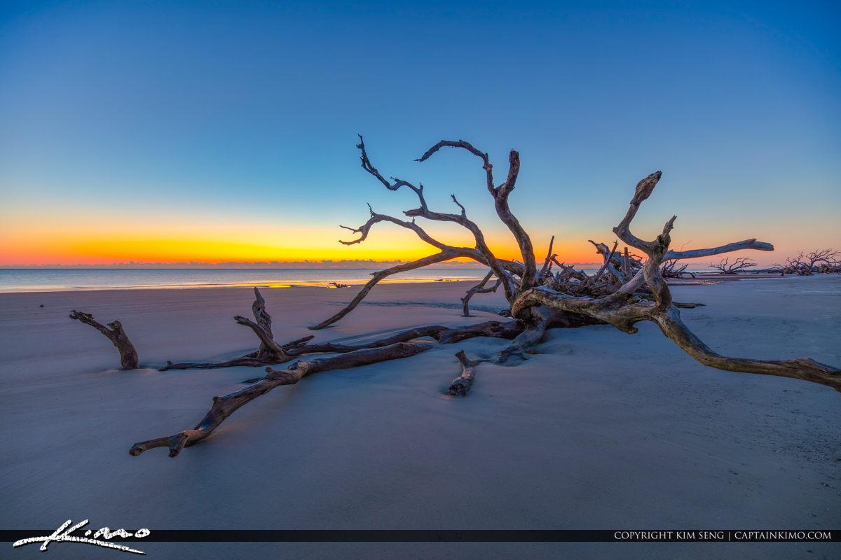 Dead Tree Fall on Beach at Driftwood Beach Georgia