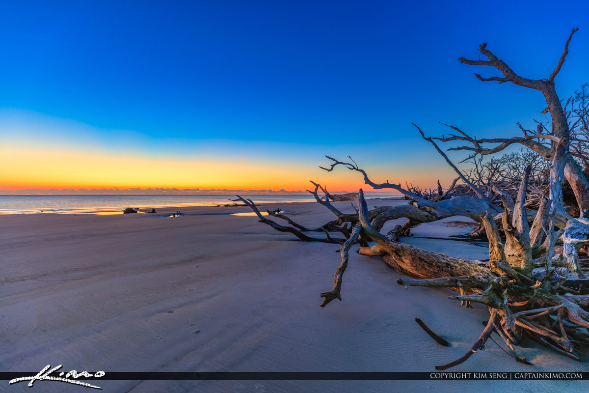 Driftwood at the Beach Before Sunrise Color