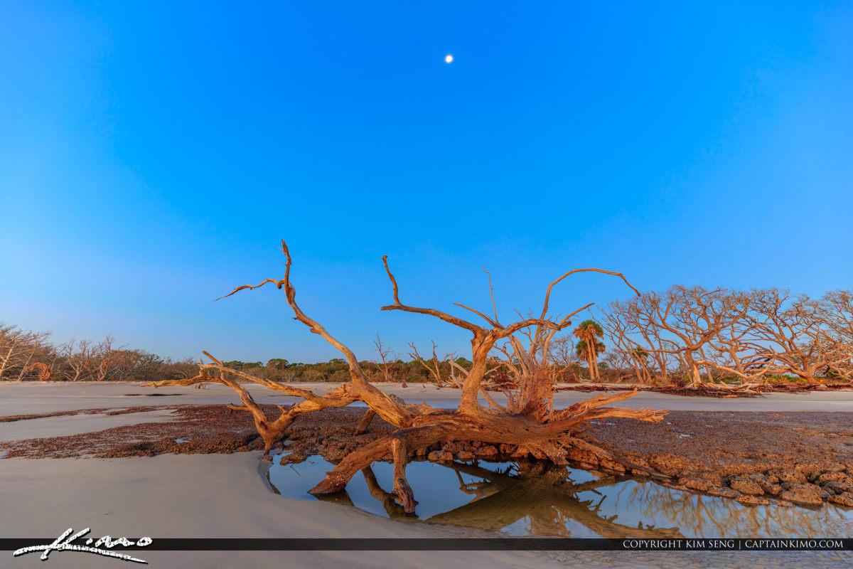 Driftwood Beach View