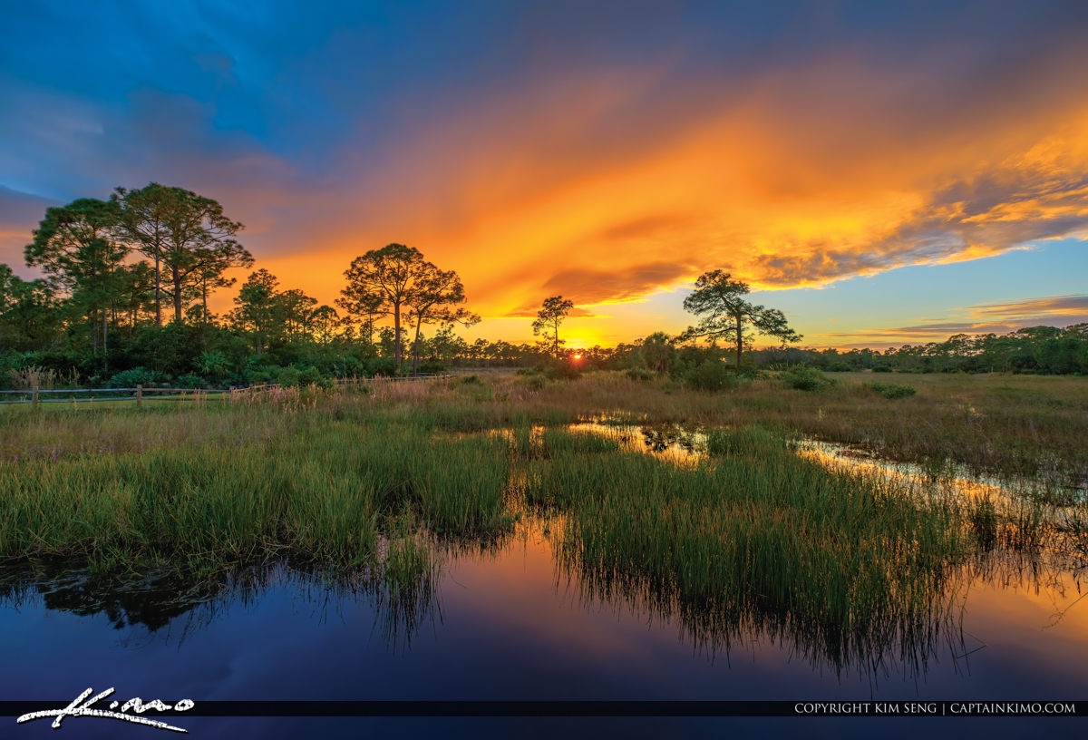 Acreage Pines Natural Area Sunset Wetlands Palm Beach County Florida
