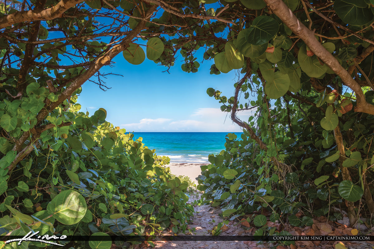 Bluewater Beach Secret Entrance View Through Seagrape Trees Jupiter