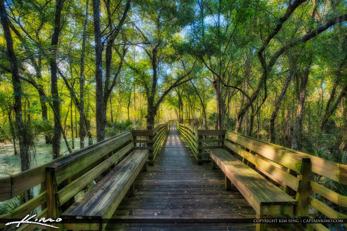 Bench at Lettuce Lake Park Tampa Florida