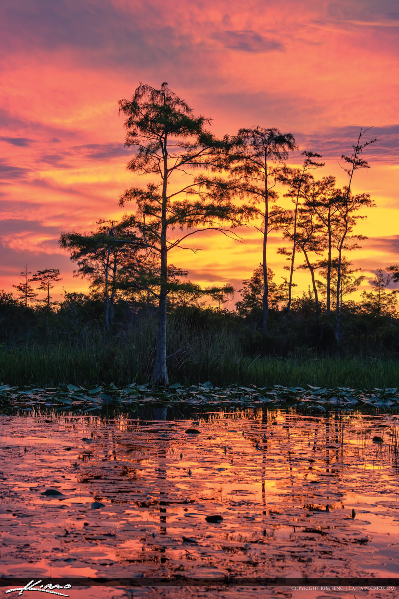 Cypress Tree Sunset at Palm Beach Natural Area
