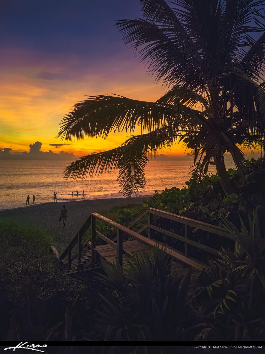 Sunrise Coconut Tree Boardwalk