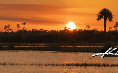 Pine Glades Sunset Over Florida Wetlands