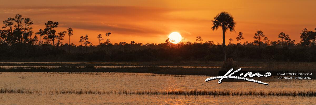 Pine Glades Sunset Over Florida Wetlands