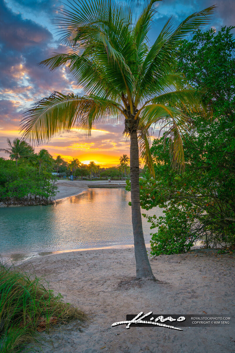 Coconut Tree Sunset Dubois Lagoon