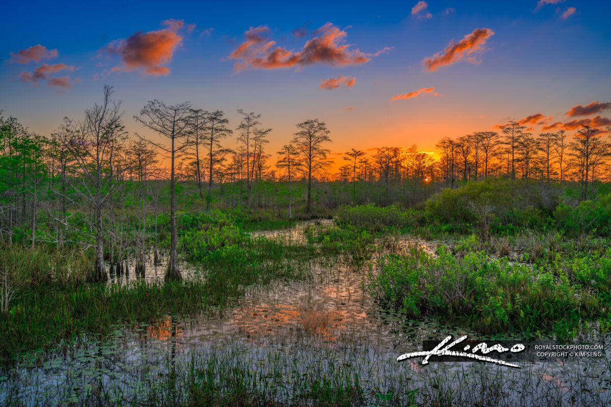 Loxahatchee Slough Sunset Earth Day 2020