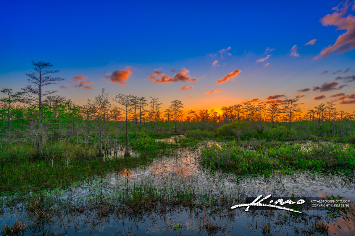 Palm Beach Gardens Wetlands Florida Landscape