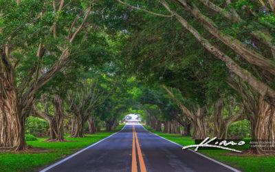 Road Underneath the Bayan Trees Hobe Sound Florida Version 2020