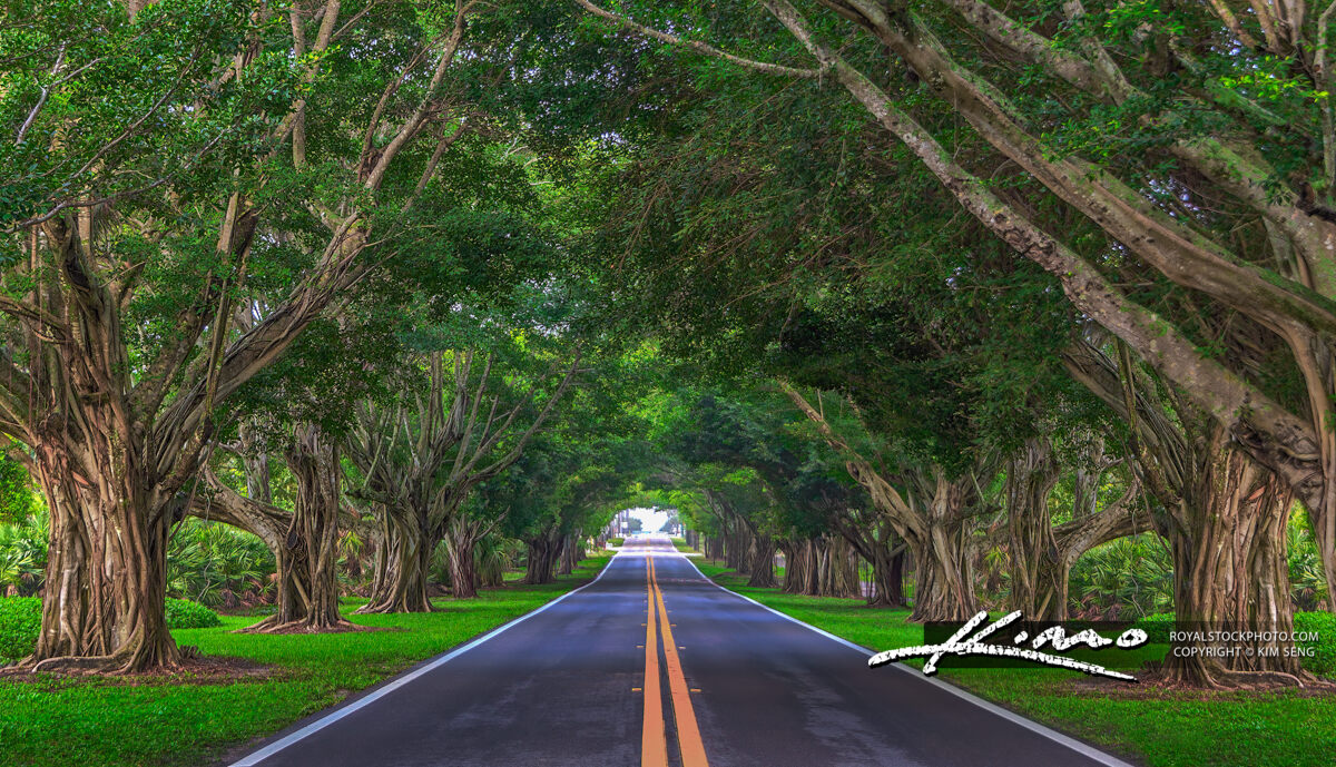Road Underneath the Bayan Trees Hobe Sound Florida Version 2020