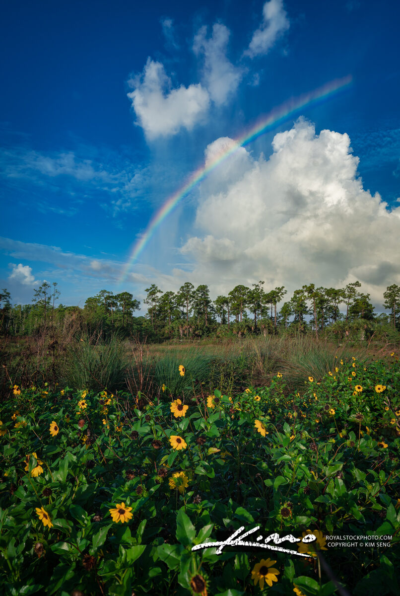 Cyoress Creek South Natural Area Rainbow and Sunflower