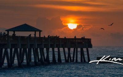 Juno Beach Pier Sunrise and Birds Atlantic Ocean