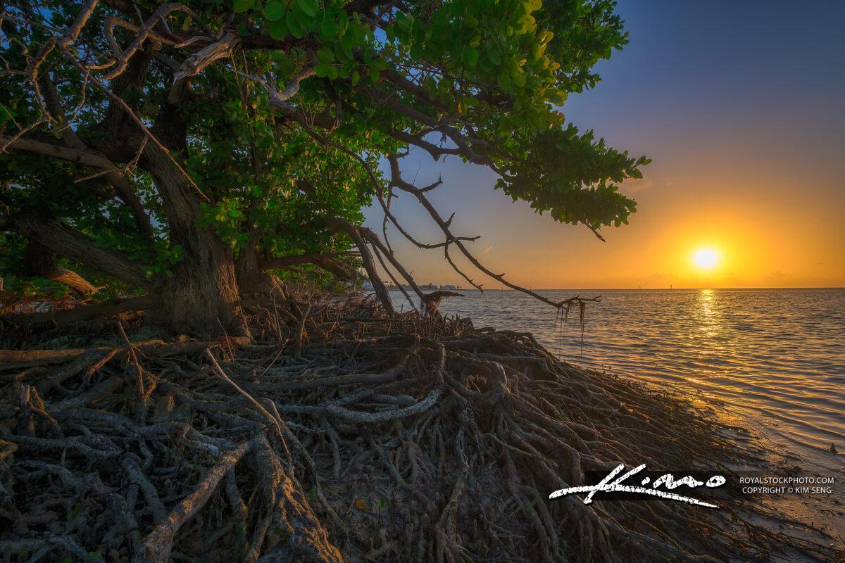 Florida Keys Mangrove at Sunrise along the Trail
