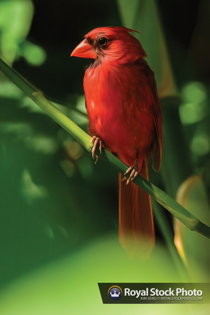 Red Cardinal Bird Art in Bamboo Forest