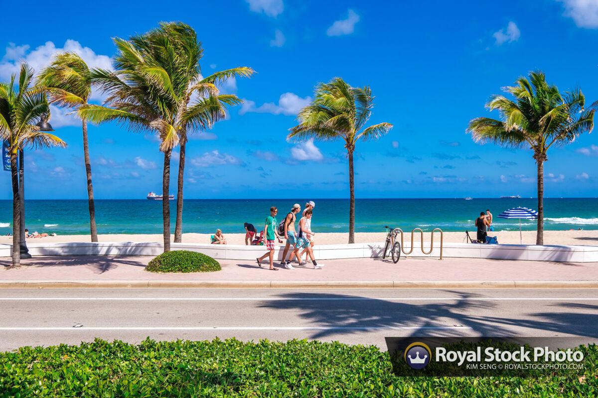 Coconut Trees Sebastian Street Beach Fort Lauderdale