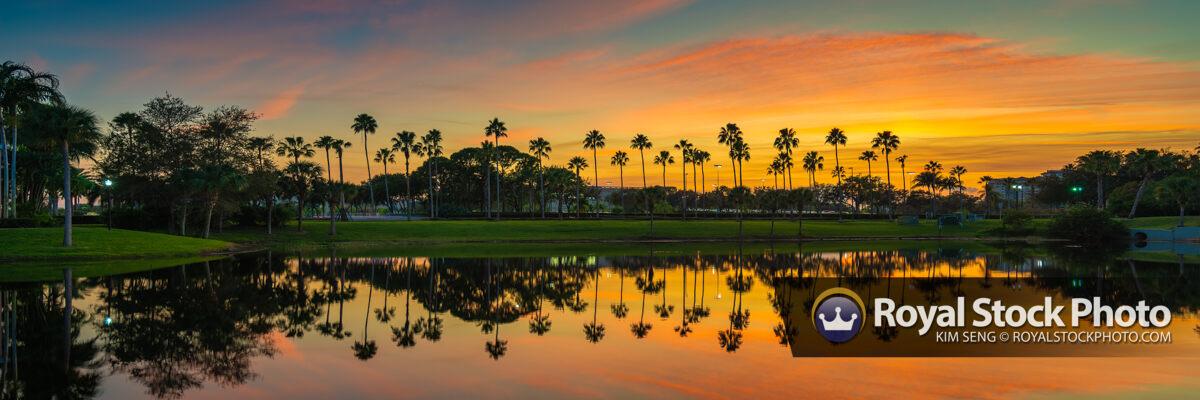 Palm Tree Reflection on Lake Panorama