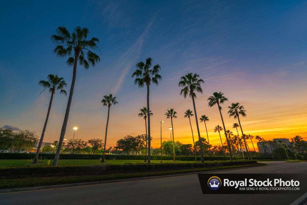 Palm Tree Sunset Road Gardens Parkway Florida