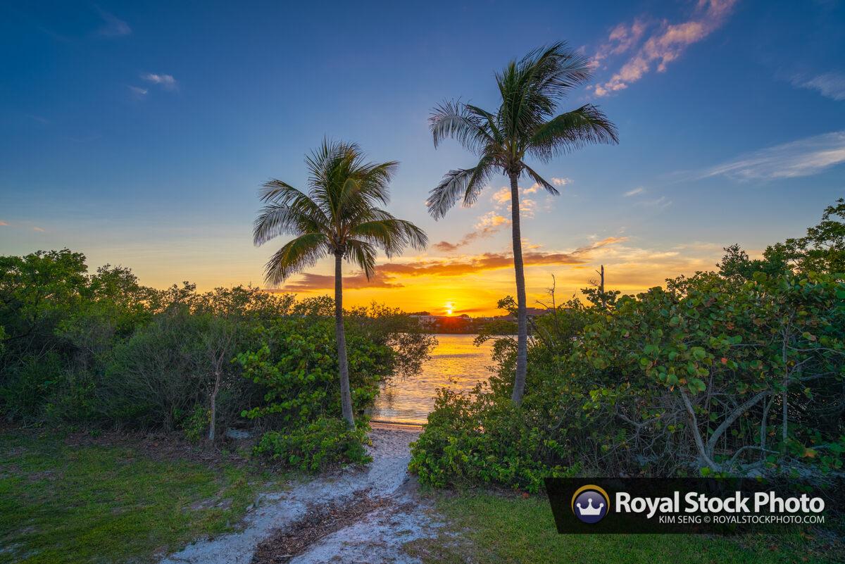Coconut Tree Sunset Tequesta Florida Jupiter Island